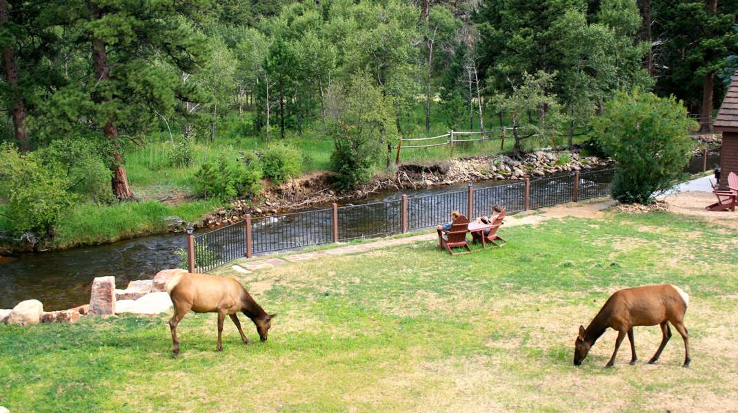 the landing estes park photo gallery Photo Gallery Estes Park River Elk Grazing by Guests at The Landing