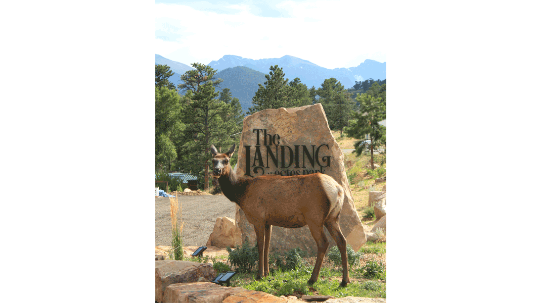 the landing estes park photo gallery Photo Gallery Estes Park Elk In Front of The Landing Sign