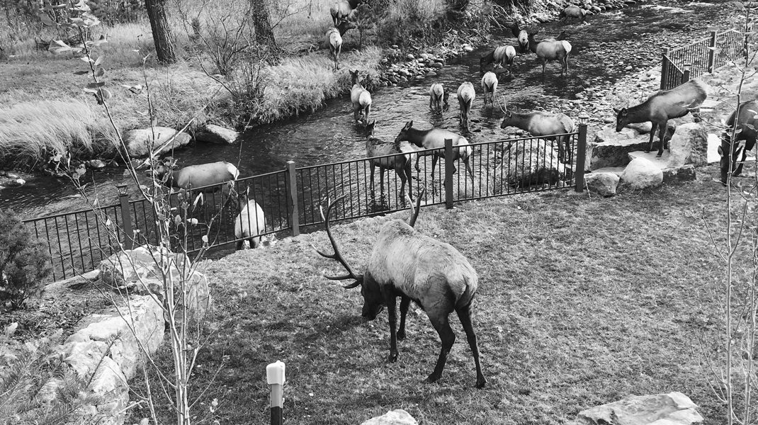 the landing estes park photo gallery Photo Gallery Estes Park River Elk Crossing River Black and White
