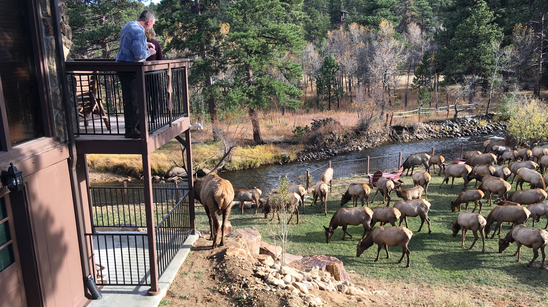 the landing estes park photo gallery Photo Gallery Estes Park River Elk Herd at The Landing1